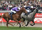Theseo Wins Crown Mackinnon Stakes