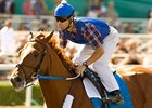 "Heavy favorite Curlin drew post 9 in the Breeders' Cup Classic.<br><a target=""blank"" href=""http://www.bloodhorse.com/horse-racing/photo-store?ref=http%3A%2F%2Fpictopia.com%2Fperl%2Fgal%3Fprovider_id%3D368%26ptp_photo_id%3D6330612%26ref%3Dstory"">Order This Photo</a>"