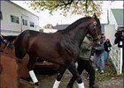 "Classic favorite Bernardini arrives at Churchill Downs Wednesday afternoon.<br><a target=""blank"" href=""http://www.bloodhorse.com/horse-racing/photo-store?ref=http%3A%2F%2Fpictopia.com%2Fperl%2Fgal%3Fprocess%3Dgallery%26gallery_id%3DS210287%26provider_id%3D368%26ptp_photo_id%3D628523%26ref%3Dstory"">Order This Photo</a>"