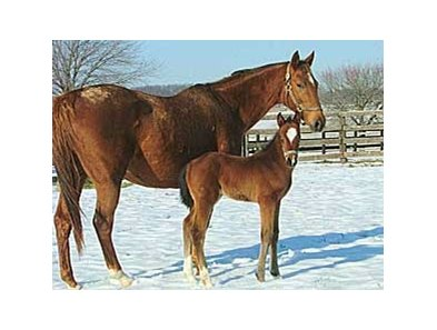 Cherokee's Boy first reported foal is a filly born Jan. 10 at Shamrock Farms near Woodbine, Md.