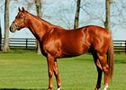 Red Giant at Three Chimneys Farm.
