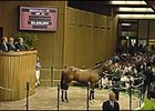 Storm Cat colt, sold for $3.5 million at Keeneland's opening session.