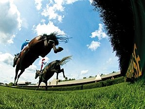 Steeplechase Safety Task Force Formed