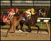 Summer Colony Continues Streak in Ladies Handicap