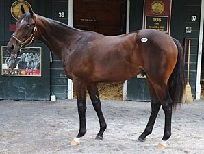 Son of Street Cry Sells for $625,000