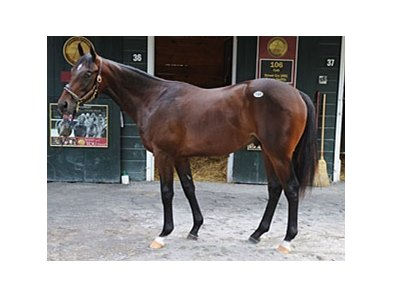 Hip #106, colt; Street Cry - Dance Swiftly by Danzig sold for $625,000.