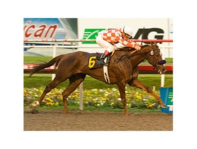 Briecat set swift fractions of :46.01 and 1:09.79 on her way to winning the Bayakoa Handicap.