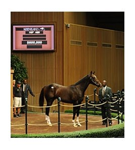 Hip #469, colt; Medaglia d'Oro -- Violent Beauty, by Gone West, brought $600,000 during the third session of the Keeneland September yearling sale Sept. 13.