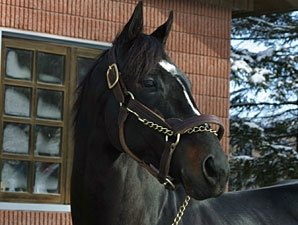 War Emblem Now Breeding To Mares Daily Bloodhorse