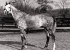 Conte Grande circa 1981 at the Schoenbron Brothers Farm, which was co-founded by Gustave C. Schoenborn Sr.