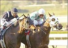 Cat Fighter Scratches Out La Canada Triumph