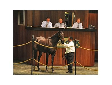 Hip# 137; colt, Scat Daddy - Madagascat by Tale of the Cat brought $400,000 during the opening session of the Ocala Breeders' Sales Co. March select sale of 2-year-olds in training in Central Florida.