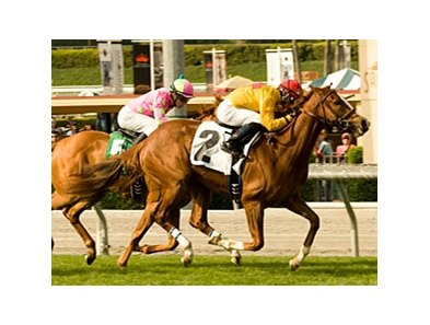 "City To City makes her Hollywood Park debut in the Senorita Stakes.<br><a target=""blank"" href=""http://www.bloodhorse.com/horse-racing/photo-store?ref=http%3A%2F%2Fpictopia.com%2Fperl%2Fgal%3Fprovider_id%3D368%26ptp_photo_id%3D8874607%26ref%3Dstory"">Order This Photo</a>"