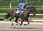 Fusaichi Samurai, breezing earlier this year before being sold for a record $4.5 million.