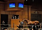 Fasig-Tipton November Wrap