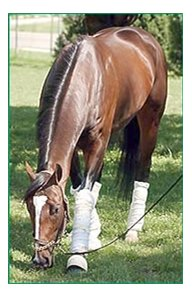 Pollard's Vision grazes at Churchill Downs.