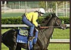 Exercise rider Dana Barnes and War Emblem begin workout at Churchill Downs on Tuesday.