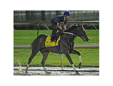 Nehro on the track at Churchill Downs.