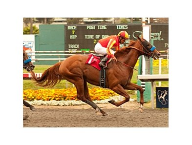 "Coil will break from the rail in the Haskell.<br><a target=""blank"" href=""http://www.bloodhorse.com/horse-racing/photo-store?ref=http%3A%2F%2Fpictopia.com%2Fperl%2Fgal%3Fprovider_id%3D368%26ptp_photo_id%3D9561791%26ref%3Dstory"">Order This Photo</a>"