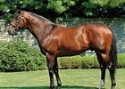 Fusaichi Pegasus is the sire of Makybe Diva's 2nd foal, a filly born Aug. 21.