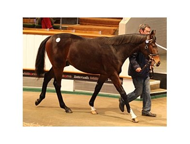 Lot 186, Galileo - Golden Coral