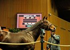 Honest Pursuit, hip#471, brought $3.1-million at the second session of the Keeneland November breeding stock sale.