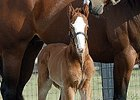 The first foal for millionaire Suave was a colt born Jan. 8 in Florida.