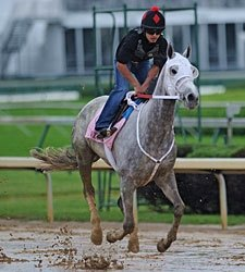Baker's Dozen Set for Kentucky Oaks