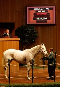 Hip #777; My White Corvette (Tarr Road - Wind Chime by Marfa), dam of Stardom Bound, brought $825,000 to top Day 3 of the Keeneland November breeding stock sale.