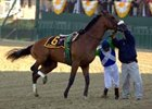 Bernardini Takes Preakness; Barbaro Injured