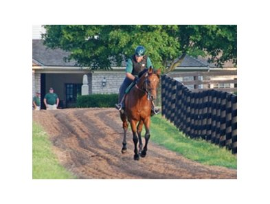 Big Brown, winner of the 2008 Kentucky Derby and Preakness, was started back under tack at Three Chimneys Farm.