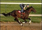 Street Sense in his final workout before Preakness Stakes.