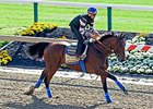 "American Pharoah<br><a target=""blank"" href=""http://photos.bloodhorse.com/TripleCrown/2015-Triple-Crown/Preakness-Stakes-140/i-c85DZPp"">Order This Photo</a>"