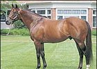 Lane's End Farm stallion Kingmambo.