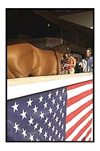 With the image of the American flag in the foreground, a yearling waits in the shadows to be shown to a prospective buyer.