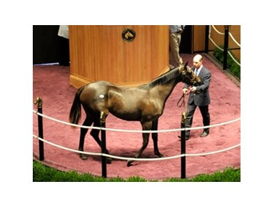 Hip 147, a Rock Hard Ten Filly that brought $350,000 at the Fasig-Tipton Select Yearling Sale.