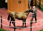 Rock Hard Ten Filly, Bernardini Colt Top FTK