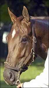 Flower Alley, a May 7, 2002, foal.