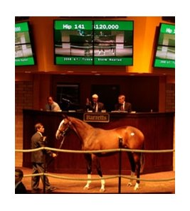 Hip #141, filly; Tiznow - Storm Hearted by Lion Hearted brought $120,000 to top Barretts California Cup Yearling Sale Oct. 5.