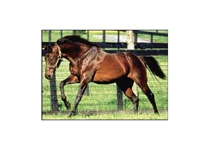 Deceased stallion Mr. Prospector is a major influence on the new sire class of 2002.
