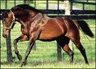 The deceased stallion Mr. Prospector, in his paddock.