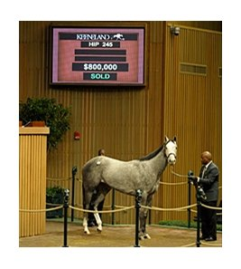 Wickedly Perfect, hip 245, sells for $800,000.