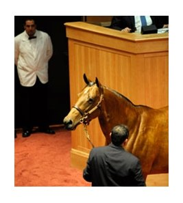 Holiday Runner, the dam of grade I winner Seventh Street (by Street Cry), sold for auction's top price of $2,150,000.