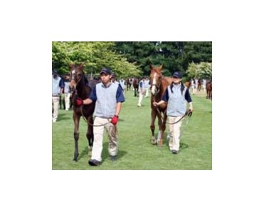 Foals parade with their dams for viewing by prospective buyers, Sunday at Teruya Yoshida's Shadai Farm.