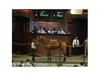 Hip #180, filly, Ado (Empire Maker - Trip by Lord At War (ARG)) brought $485,000 during the first session of the Ocala Breeders' Sales Co. March select sale of 2-year-olds in training.