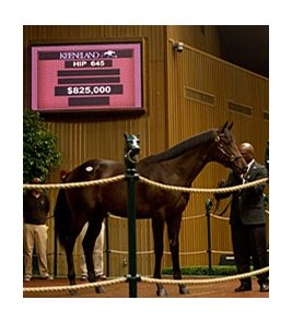 Hip #645, colt; Big Brown - Cold Awakening, by Dehere, brought $825,000 on Sept 12.