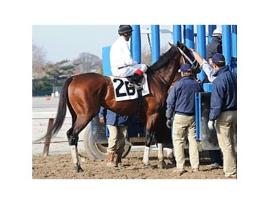 Quality Road schooling at Aqueduct on November 21.