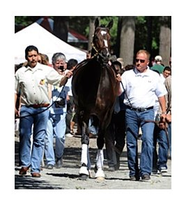 "Rachel Alexandra schools at Saratoga on August 26 in preparation for the Personal Ensign.<br><a target=""blank"" href=""http://www.bloodhorse.com/horse-racing/photo-store?ref=http%3A%2F%2Fpictopia.com%2Fperl%2Fgal%3Fprovider_id%3D368%26ptp_photo_id%3D9159883%26ref%3Dstory"">Order This Photo</a>"