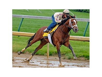 "Discreetly Mine breezed five furlongs in 1:00 1/5 at Churchill Downs on April 24.<br><a target=""blank"" href=""http://www.bloodhorse.com/horse-racing/photo-store?ref=http%3A%2F%2Fpictopia.com%2Fperl%2Fgal%3Fprovider_id%3D368%26ptp_photo_id%3D8923496%26ref%3Dstory"">Order This Photo</a>"