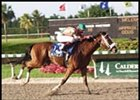 Tropical Park Derby winner Political Attack could join the field for the Tampa Bay Derby.